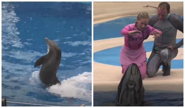 Robotický delfín. Foto: snímek obrazovky YouTube