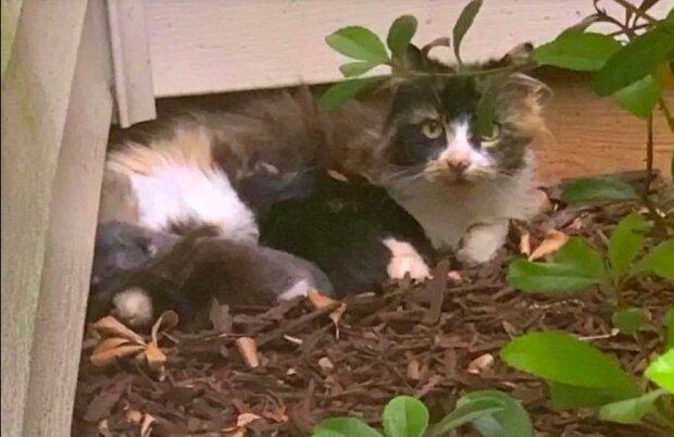"""""""Rozhodně mě sledovala"""": toulavá kočka nepřijala pomoc, dokud záchranáři nenašli její koťata"""
