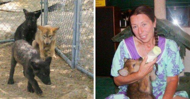Dívka zachránila tři opuštěná vlčata: nyní má tři nejlepší přátele