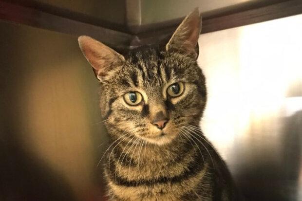 """""""Je pravděpodobné, že kočka utekla a od nových majitelů"""": Kočka se vrátila domů poté, co zmizela před 5 lety"""