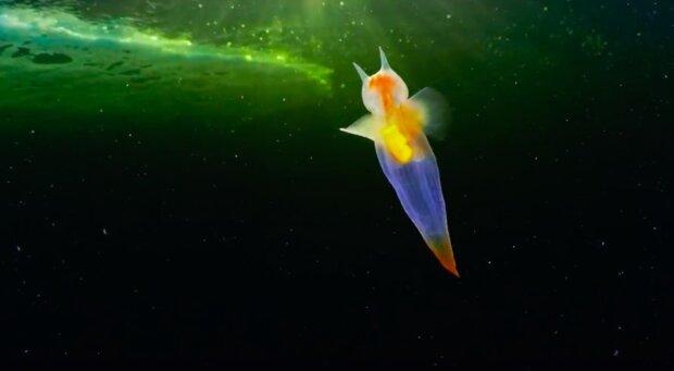 """""""Toto není počítačová grafika, je naživu"""": krásné video mořského anděla"""