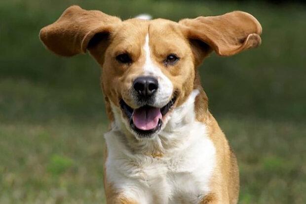 Studie: reakce mozku psa na hlas majitele je podobná reakci dítěte na hlas matky