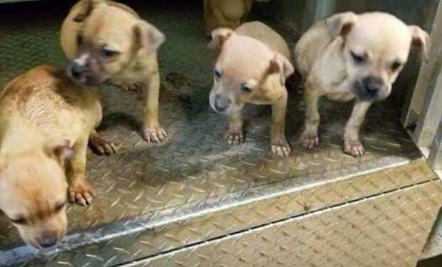 """""""U psů jsem nikdy nic takového neviděl"""": dívka našla na ulici drobná štěňátka a jedno z nich mělo velmi zvláštní uši"""