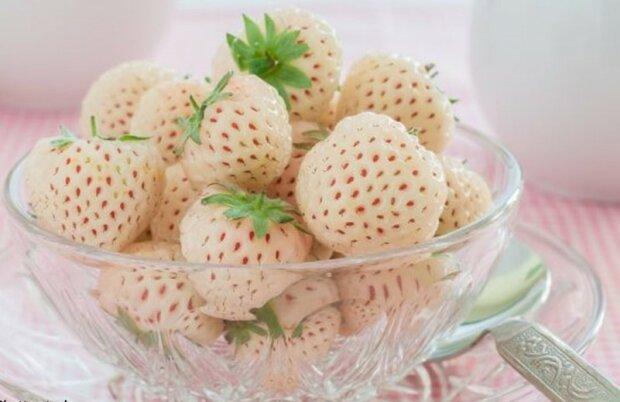 Painberry: Nové bilé jahody s příchutí exotiśkeho ovoce