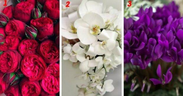 Ženský psychologický test: Vybrána vámi květina, prozradí vaše silné stránky