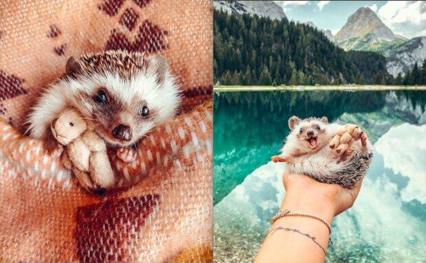 Na webu našli nejšťastnějšího ježka na světě: vše díky paní