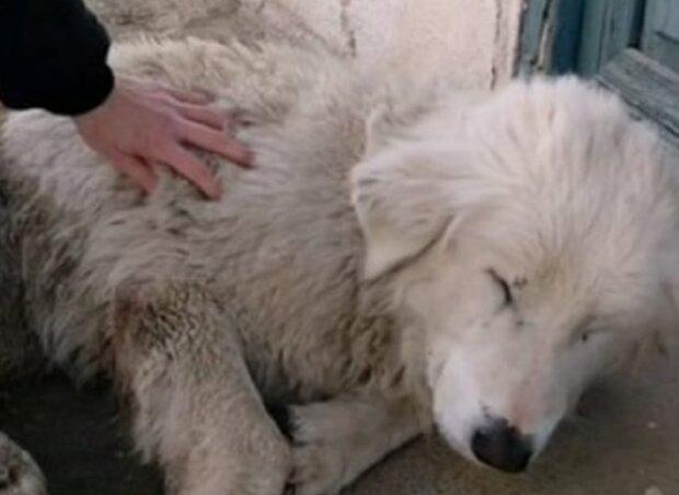 Pes. Foto: snímek obrazovky slonn.me