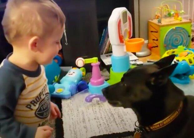 """Vážná debata"": kojenec šel ke psovi, aby si s ní promluvilo. Máma nahrála dialog na video"