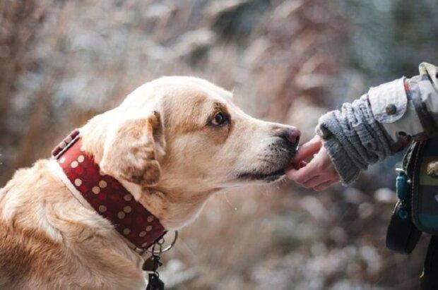 Studie zjistili, jak psi rozpoznávají špatné lidi