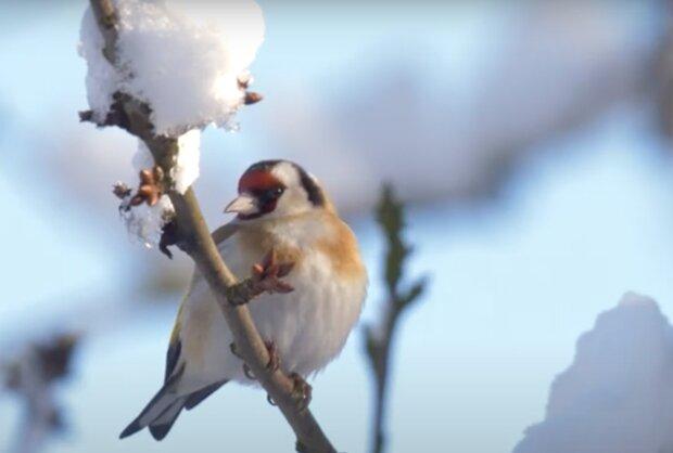 Aprílové počasí s vánici a sněhem: Meteoroložka Dagmar Honsová prozradila, kdy se zimní charakter počasí umoudří