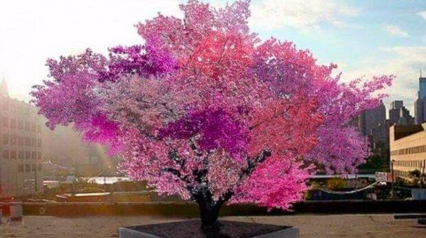 Švestky, broskve, nektarinky, třešně a dokonce i mandle: na fantastickém hybridním stromu roste čtyřicet druhů ovoce