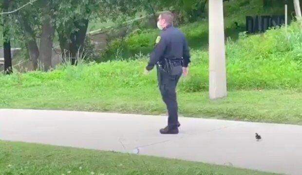 Kvůli nudě a touze být prospěšní policisté se pustili do doprovodu kachňat