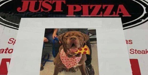 Proč na krabicích v pizzerii umístili fotky psů s útulku
