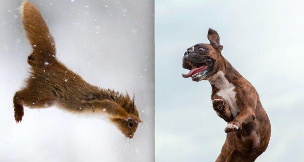 Od veverky do tučňáka: osmnáct vtipných fotografií, které zobrazují zvířata ve skoku