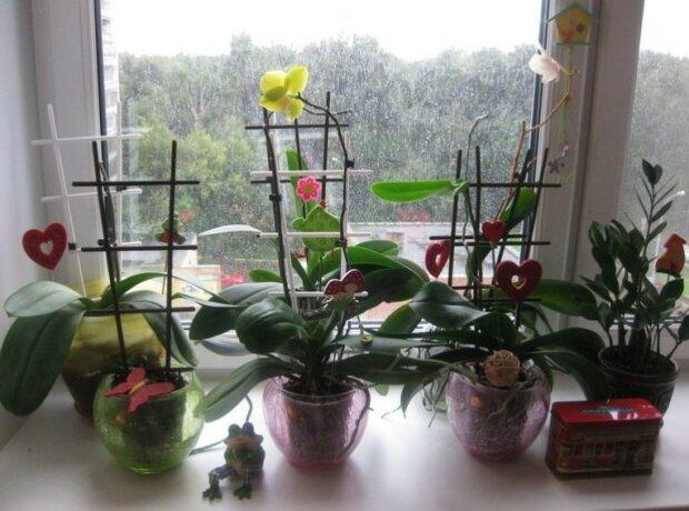 Nikdy si nenechávejte doma orchidej: proč v práci můžete, ale doma v žádném případě