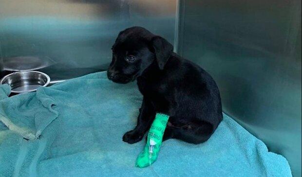 Neslyšící štěně, kterého nikdo nechtěl si vzít, bylo zachráněno hluchým chlapem a teď jsou jednou rodinou