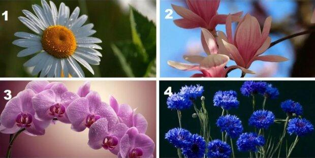 Psychologický test: vybraná květina odhalí do koho jste zamilovaní