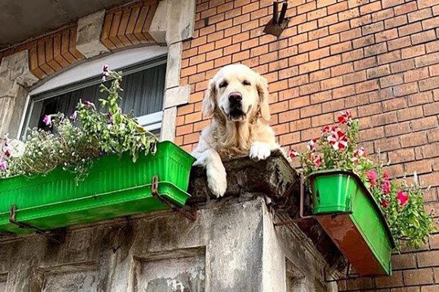 """""""Miluje ho celý Gdaňsk. Pes je úžasný. Když ho vidím, je mi teplo a v duši mám pocit klidu"""": Na mapě byla nalezena lokace s psem na balkoně"""