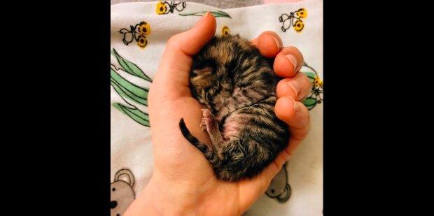 """""""Když jsem zasypala, držela jsem ji vedle srdce, jeho bití se Flóru uklidnilo"""": jako kotě vážící 71 gramů, šílené bojovalo o život"""