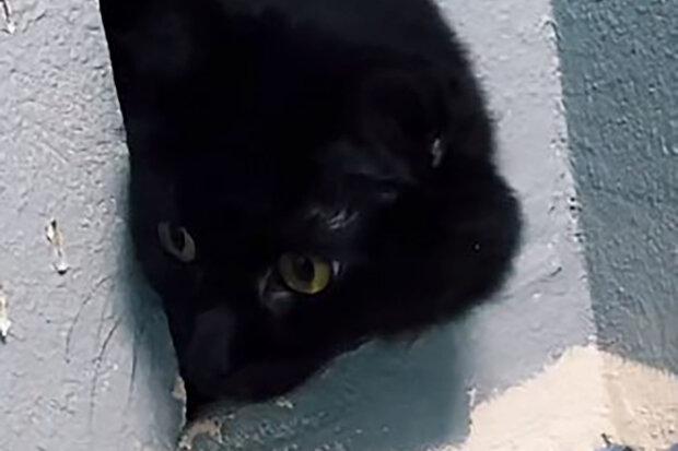 Kočka se při výměně dlažby v koupelně omylem uzavřeli ve zdi: příběh záchrany zvířete