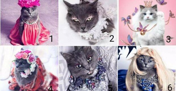 Psychologický test pro ženy: Vybrána vámi kočka prozradí vaše hlavní ženské vlastnosti