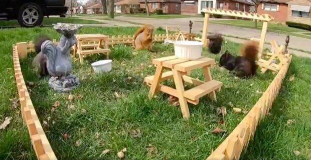 Američan kvůli nudě otevřel pro veverky jedinou restauraci v zemi, návštěvníků je opravdu hodně