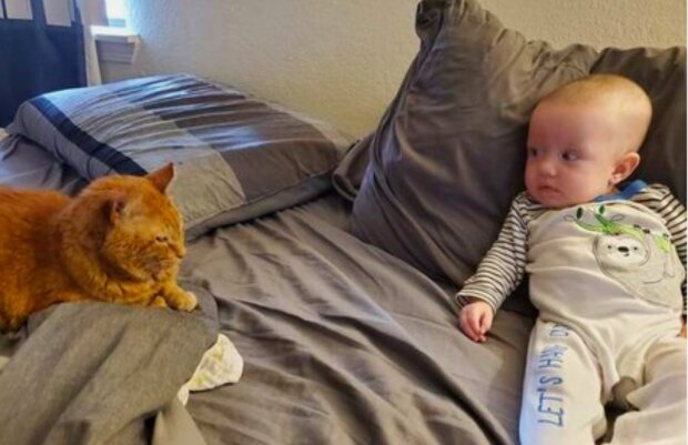 Starý kocour předstíral, že se mu malá dcera majitelů nelíbí, ale videochůvička odhalila jeho tajemství