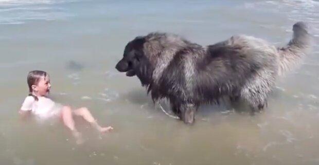 """V dojemném video obrovský pes """"zachrání"""" svou malou vlastníci z velkých vln"""