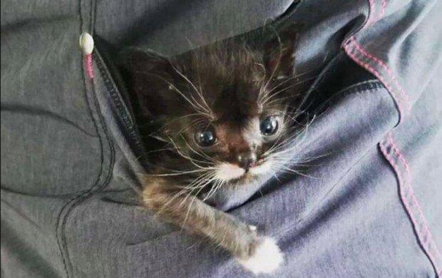 Malé kotě, které vážilo 100 gramů, zůstalo samo, ale neobvyklý pomocník přišel na pomoc lékařům