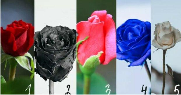 Psychologický test: Která růže se vám líbí nejvíce
