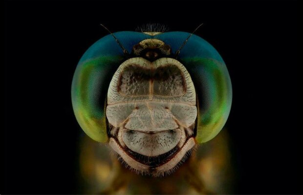 """Mouchy, vážky, včely, vosy: fotograf zachytil """"výrazy"""" poletujícího hmyzu"""