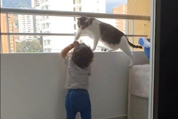 """""""Udržování pořádku"""": kocour vždy chrání dítě a sleduje jeho bezpečnost"""