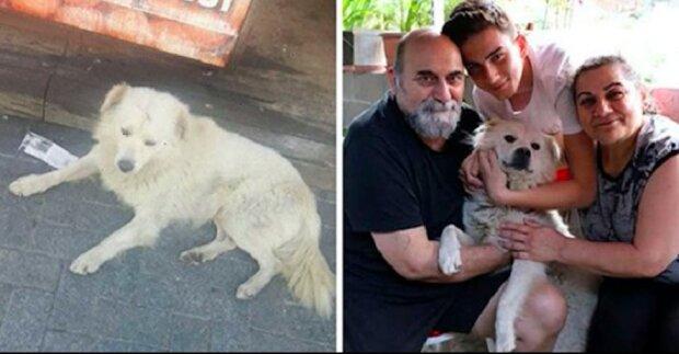 Zmizelého psa, kamarád rodiny našel v jiném městě