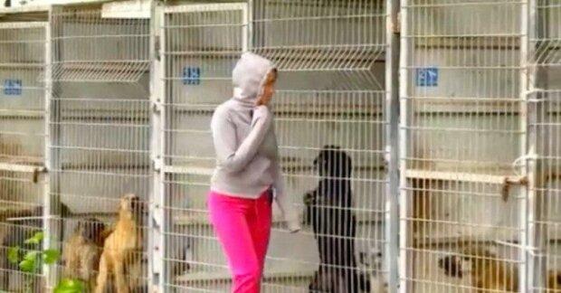 Žena přišla do útulku, ale nemohla si vybrat, jakého psa si vezme, a tak koupila všechny