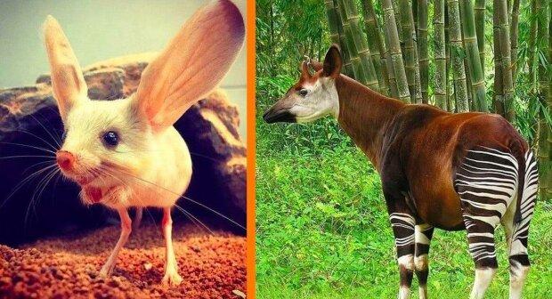 Vzácní živočichové, jejichž existenci někdo možná ani nebude věřit