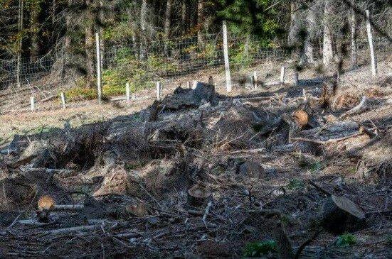 Je čas zkontrolovat vaši pozornost: najdete-li jelena mezi pařezy