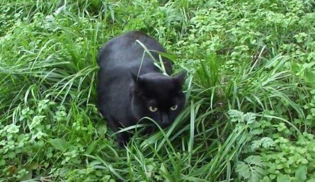 Když se kočka vrátila z procházky, majitel si všiml její podivné chování a pak našel malé zvíře na krku svého mazlíčka