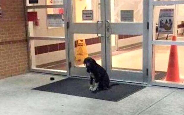 Pes každé ráno seděl vedle školních dveří a čekal na pomoc: hubený a černý pes se díval na lidi a vrtěl ocasem