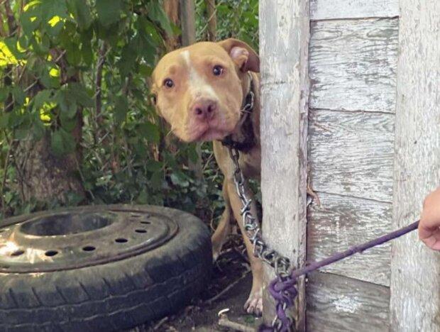 Pes. Foto: snímek obrazovky thedodo.com