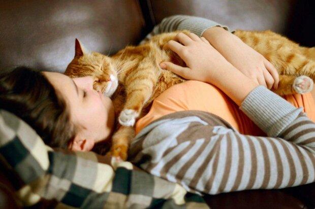 Přátelství a vzájemné porozumění s kočkou: čtyři jednoduchá pravidla bezproblémového soužití