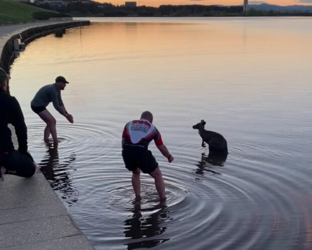 Záchranáři a klokan. Foto: snímek obrazovky YouTube