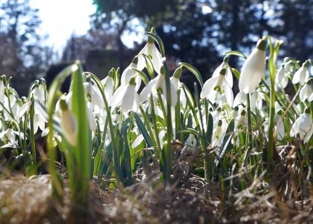 Počasí o víkendu: Chladná rána doplní v příštích dnech jarní teploty