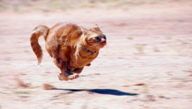 """Zastav se na minutku"": zábavné fotografie koček za běhu"