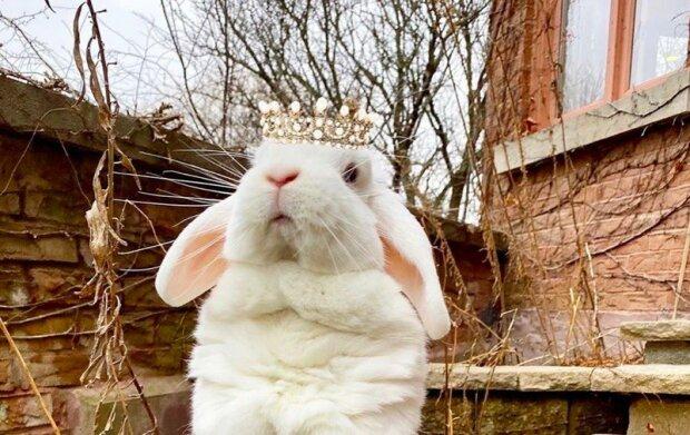 """""""Žiju si královským životem se svým sluhou"""": Královna Blanco se stala novou hvězdou Instagramu"""