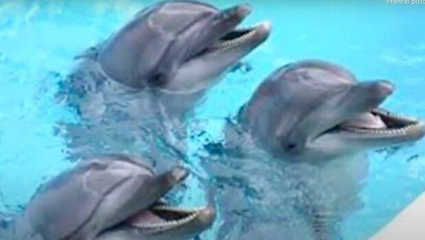 Jak delfíni zachránili psa