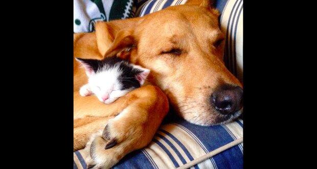 """Jako kočka se psem: zachráněný pes se stal """"matkou"""" pro koťata, o které se stará jeho majitelka"""