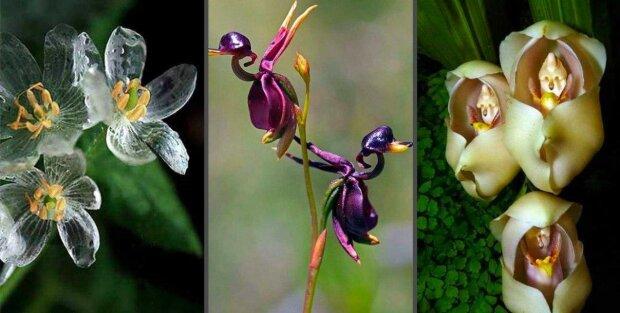 Ohromující fotografie zvláštních a vzácných květin, které vypadají jako z pohádky