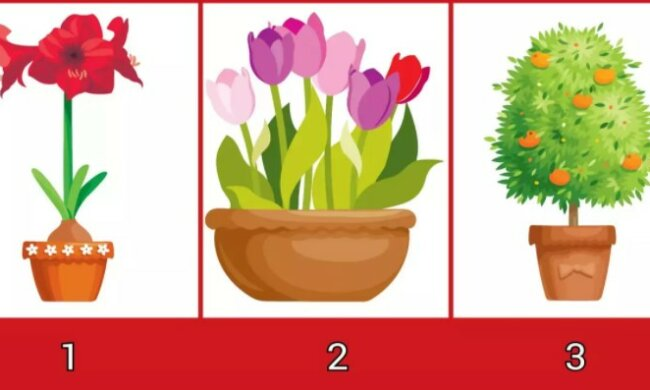 Jednoduchý vizuální test osobnosti: vybraná rostlina odhalí, jaká jste žena