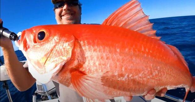"""""""To se stane, když jako dítě spláchnete zlatou rybku Freda na záchod"""": Rybář chytil obří zlatou rybku"""