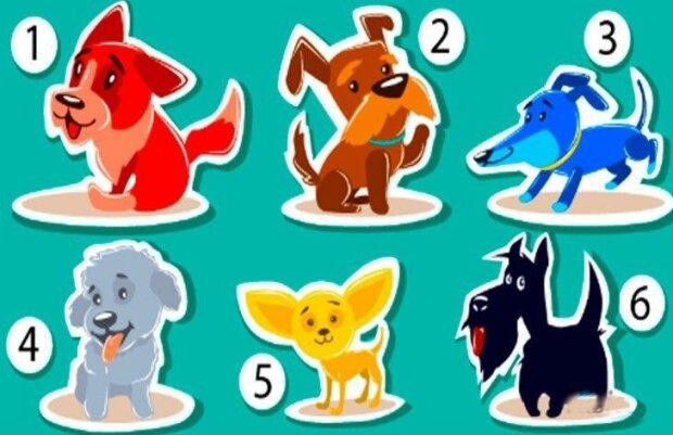 """Vyzkoušejte test """"psychologie barev"""": vyberte si psa a zjistěte svou náladu v životě"""